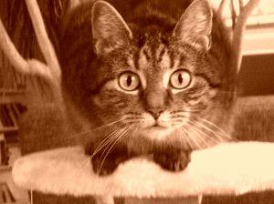 Katze, Blog